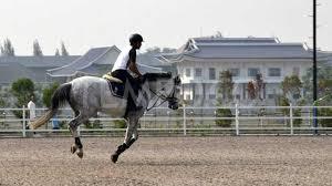 taruhan balap kuda sbobet